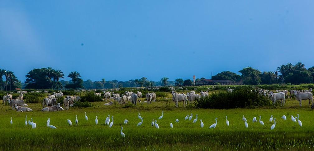 Fazenda na região do Pantanal no município de Cáceres (MT) — Foto: Chico Valdiner/Gcom-MT