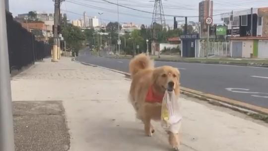 Vídeo de cadela buscando pão 'sozinha' na padaria viraliza na internet: 'Não esperava essa repercussão', diz dono