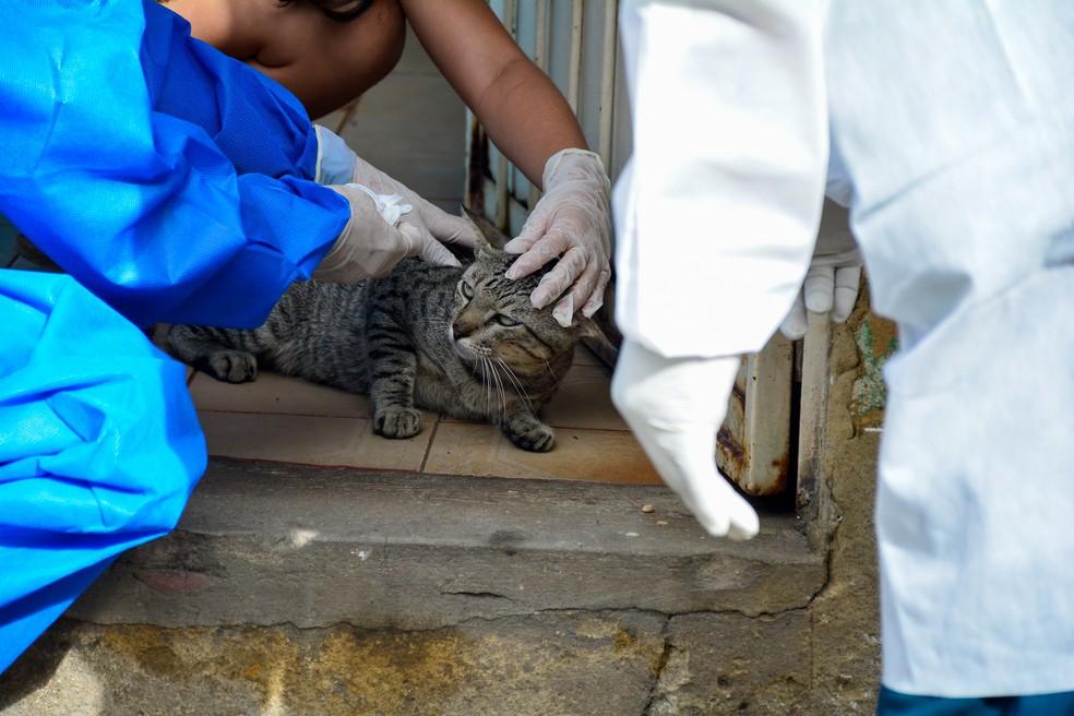 Gato é examinado em Manaus — Foto:  Valdo Leão / Semcom
