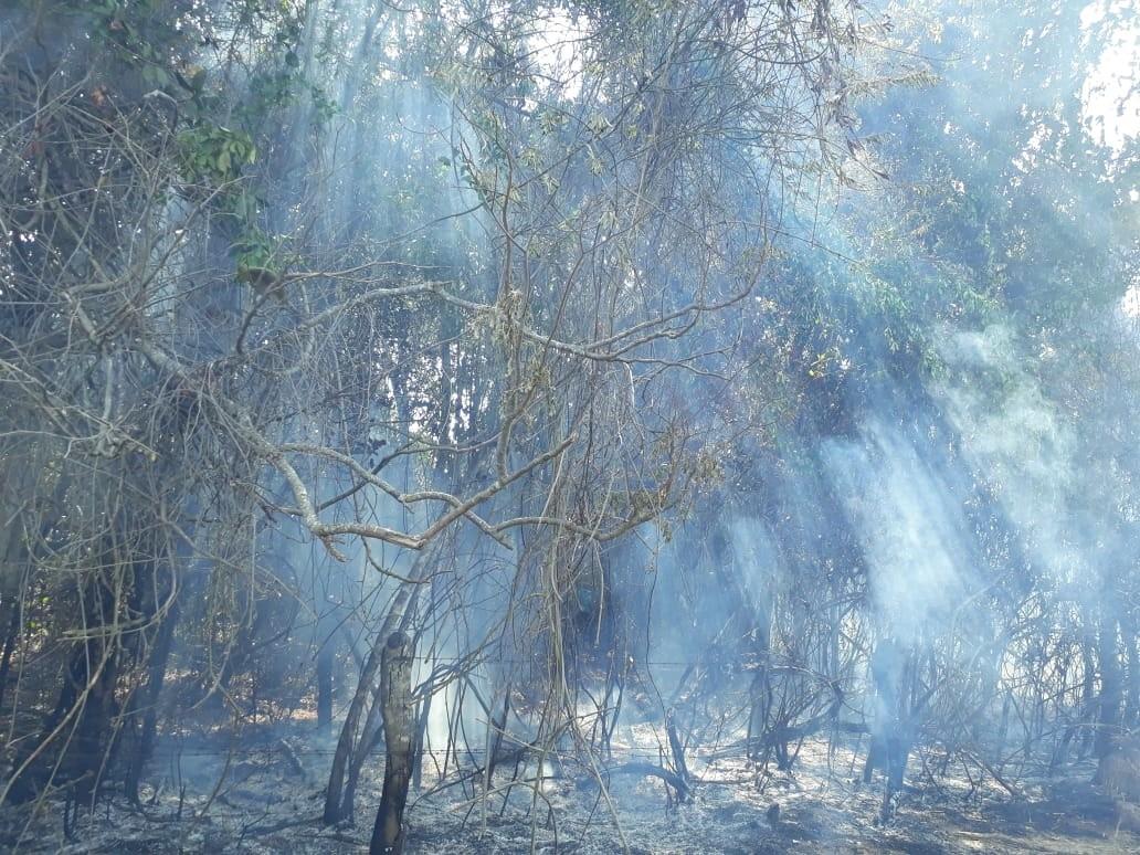 Bombeiros registram 12 ocorrências de incêndios em Divinópolis nesta quarta-feira - Notícias - Plantão Diário