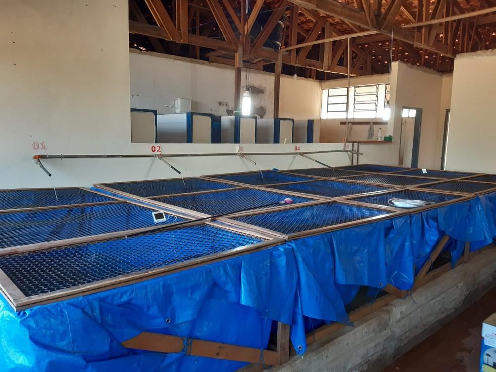 Ranário do campus da Unir em Presidente Médici (RO) — Foto: Curso de Engenharia de Pesca/Reprodução