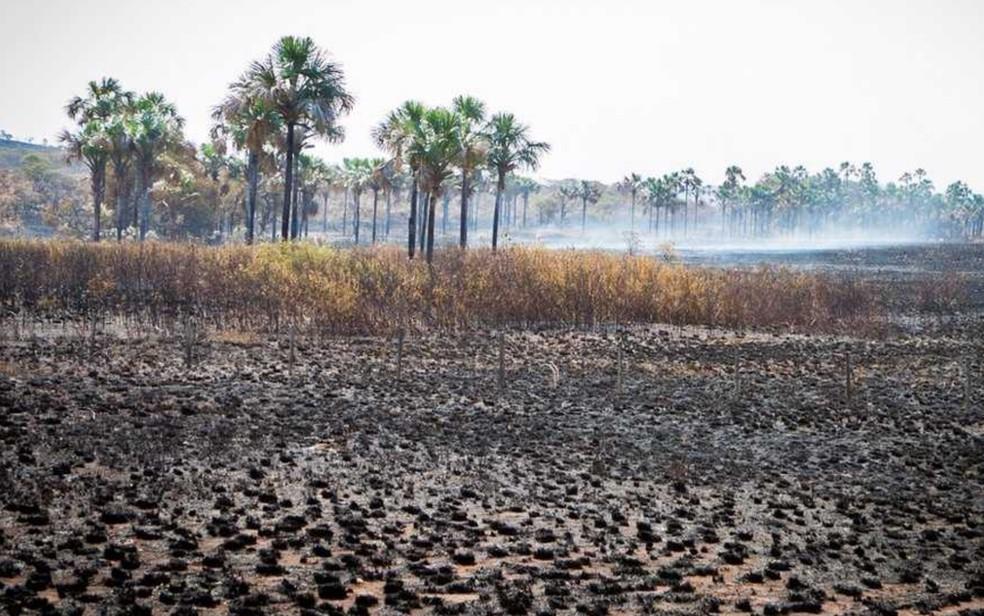 Incêndiu destruiu 26% da área do Parque Nacional da Chapada dos Veadeiros (Foto: Davi Boarato/BBC Brasil)