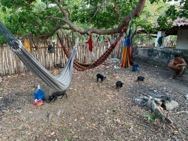 Nove trabalhadores são achados em trabalho 'escravo' convivendo com porcos e fezes no interior do Ceará