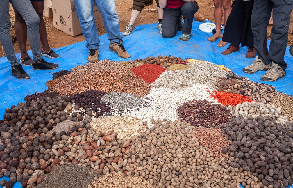 Muvuca de sementes que serão  usadas para plantio.  — Foto: Lilo Clareto/Instituto Socioambiental (ISA)