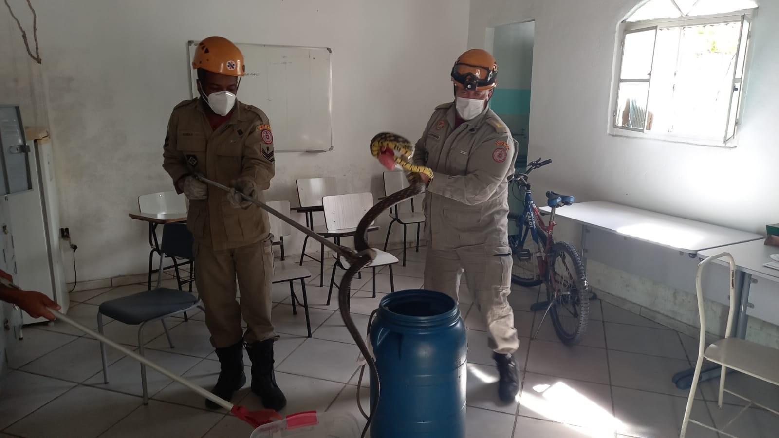 Cobra da espécie caninana é encontrada dentro de oficina em Três Rios