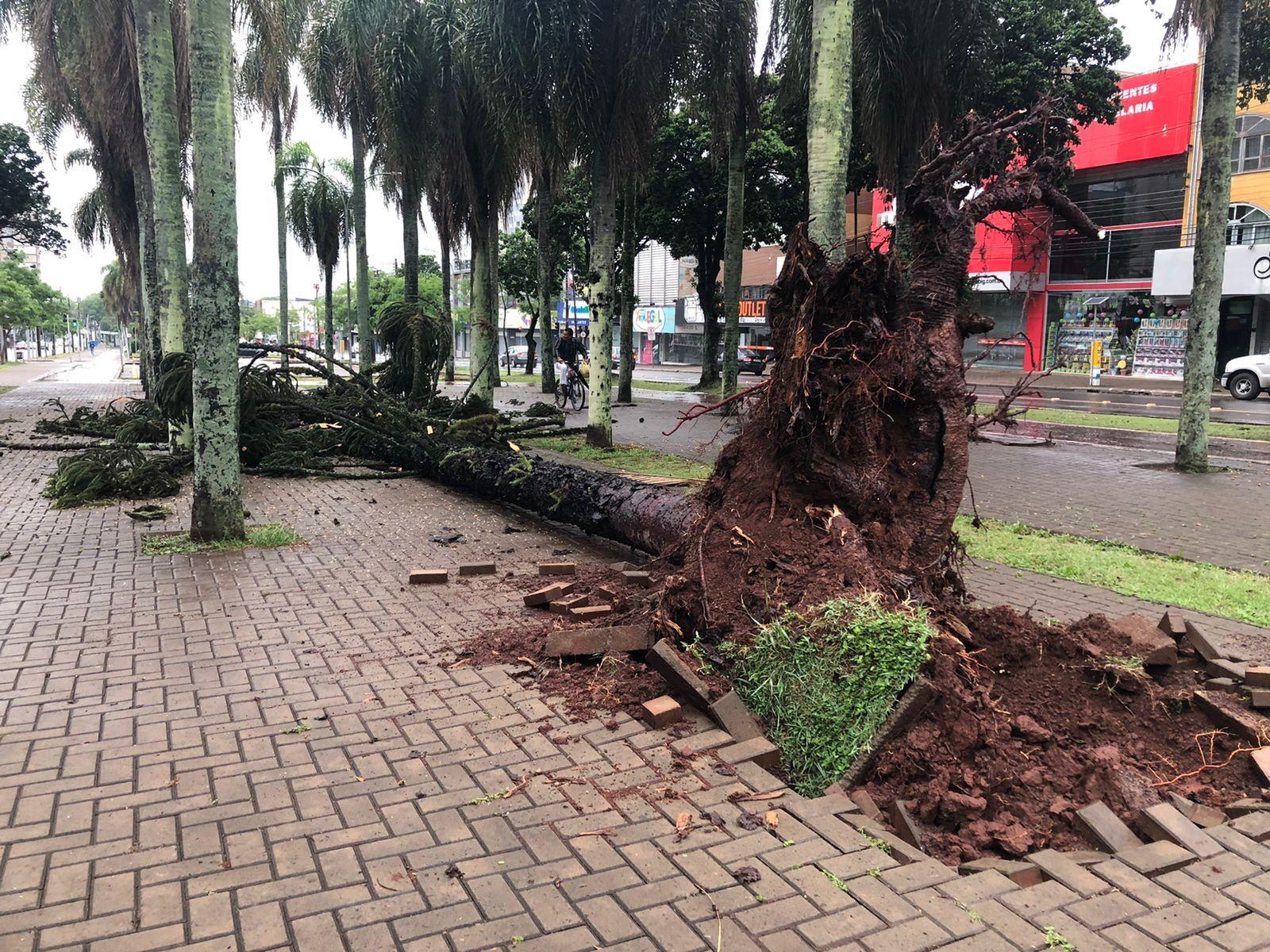 Paraná tem 45,8 mil imóveis sem energia neste sábado, diz Copel