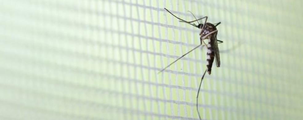 Em 2020, novo ciclo de circulação do sorotipo 2 do vírus no país deve puxará para o alto casos de dengue, doença transmitida pelo mosquito Aedes aegypti — Foto: Getty Images via BBC