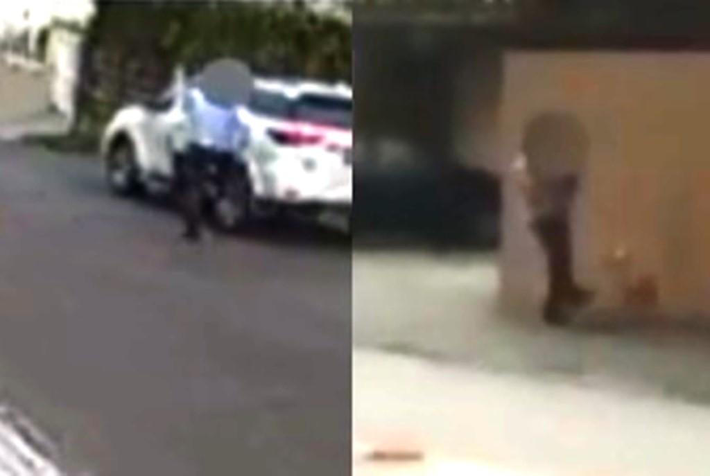 Polícia investiga agressão a chutes contra cachorros em Joinville; VÍDEO