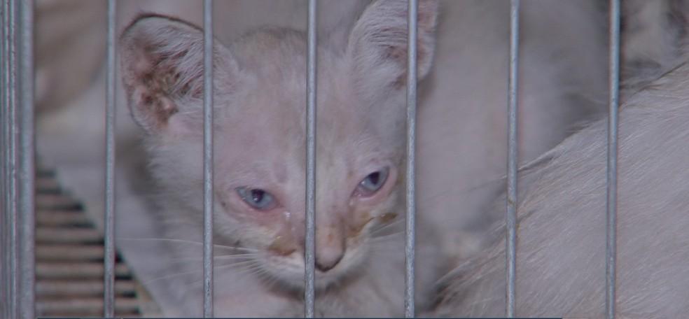 Todos os gatos tinham ferimentos e foram abandonados na sede de uma ONG em Cuiabá — Foto: TV Centro América/Reprodução
