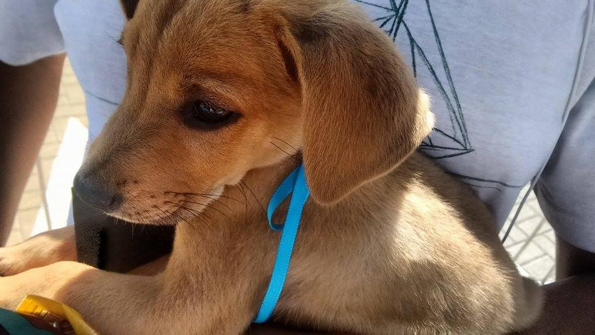 Feira de adoção de animais será realizada em Cabo Frio, no RJ