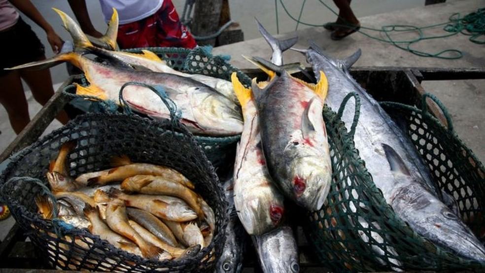 Doença está associada ao consumo de peixes. — Foto: Getty Images
