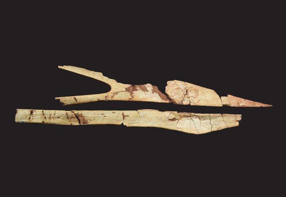 Crânio de pteurossauro Keresdrakon vilsoni foi encontrado no Sul do país — Foto: Universidade do Contestado/Divulgação