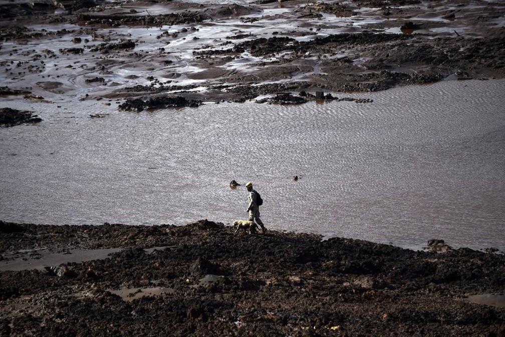 Bombeiros e cães procuram por corpos na região do Córrego do Feijão, em Brumadinho, dois dias após o rompimento da barragem da Vale. — Foto: Douglas Magno/AFP