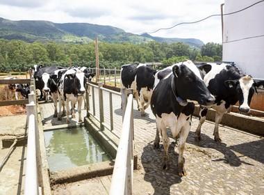 boi-vaca-bovino-pecuaria-pecuária-confinamento-bezerro (Foto: Fernando Martinho)