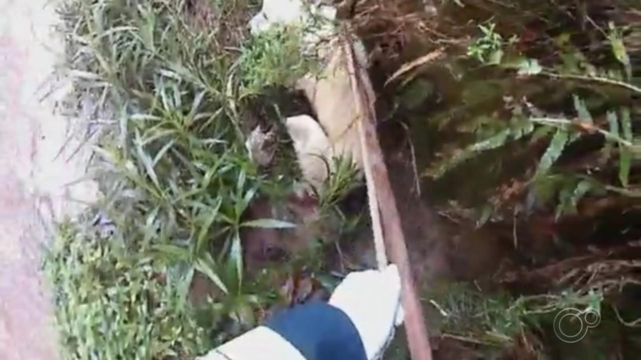 Bombeiros e Defesa Civil resgatam cachorro que caiu em córrego de Várzea Paulista