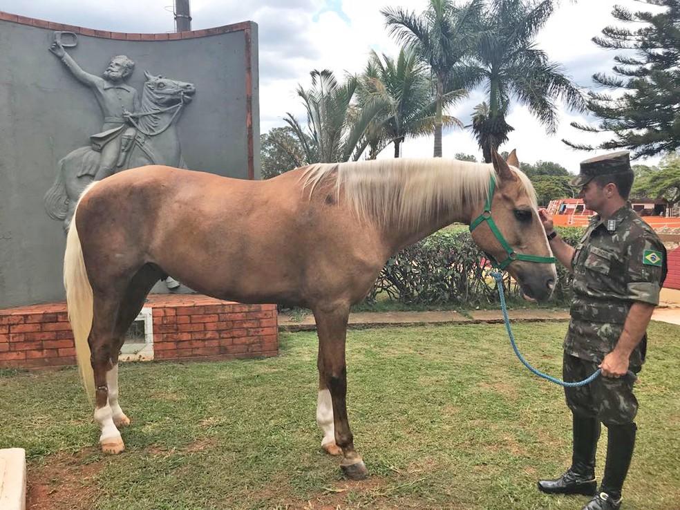 Comandande do 1º RCG, coronel Braga, ao lado do cavalo Baio e, ao fundo, quadro do Marechal Deodoro da Fonseca — Foto: Marília Marques/G1