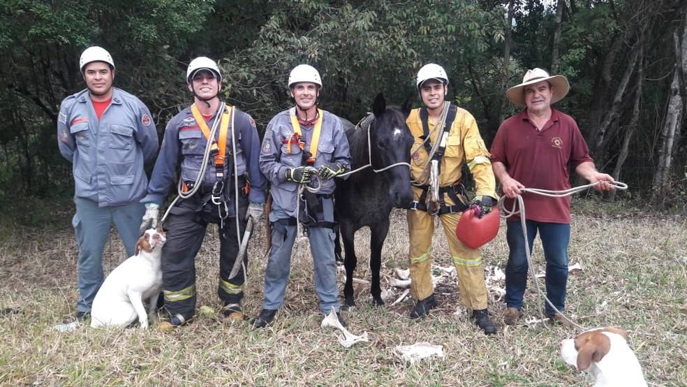 Depois de um trabalho de seis horas para o resgate, cavalo foi devolvido ao seu dono — Foto: Corpo de Bombeiros/Divulgação
