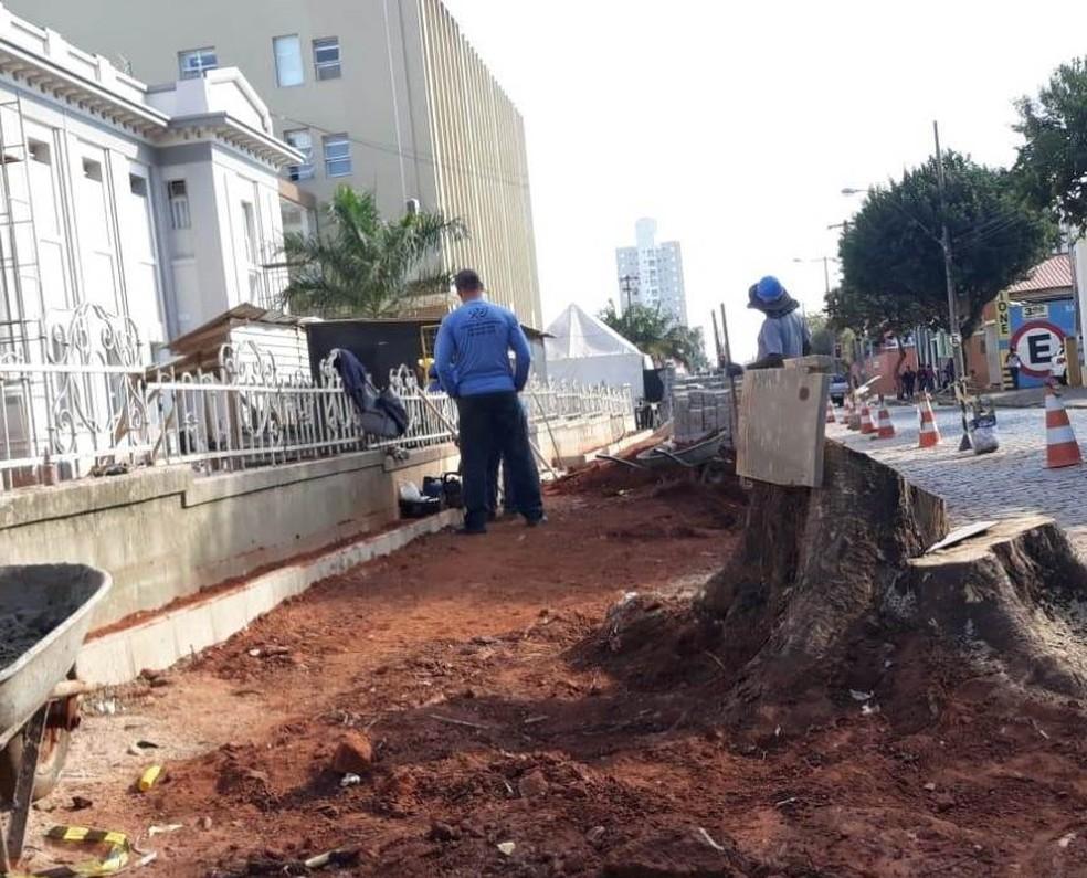 Corte de árvores na Santa Casa de Araraquara (Foto: ACidadeON/Araraquara)