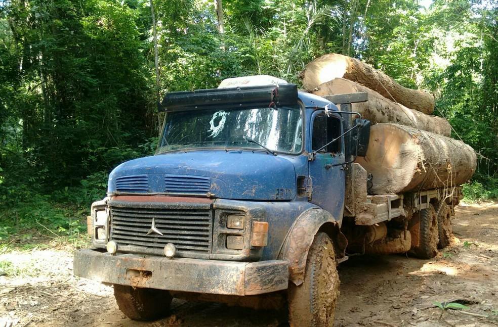 Madeiras que estavam sendo retiradas por madeireiros (Foto: Arquivo Pessoal)