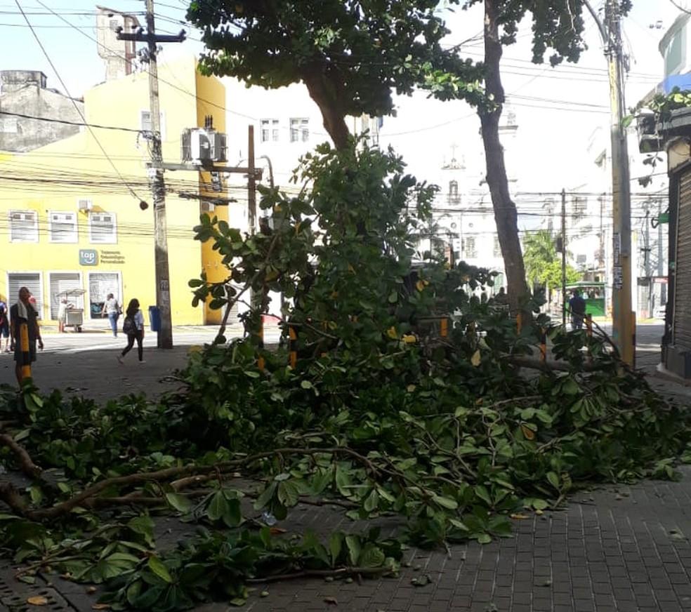 Parte de árvore caiu na Rua Duque de Caxias, no Centro do Recife — Foto: Reprodução/WhatsApp