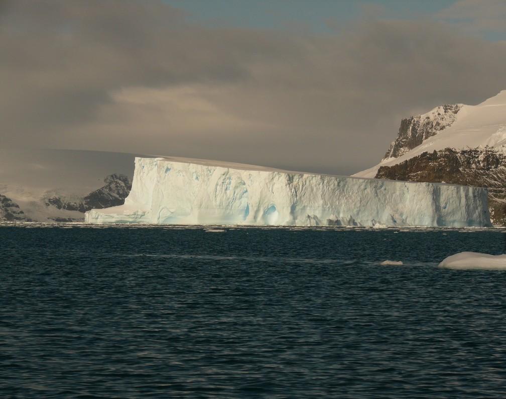 Gramíneas sobrevivem tanto na costa como nas montanhas da Antártica, Esalq Piracicaba — Foto: Leonardo José Silva/Arquivo pessoal