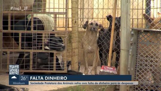 Associações protetoras de animais passam por dificuldades em Juiz de Fora e Barbacena