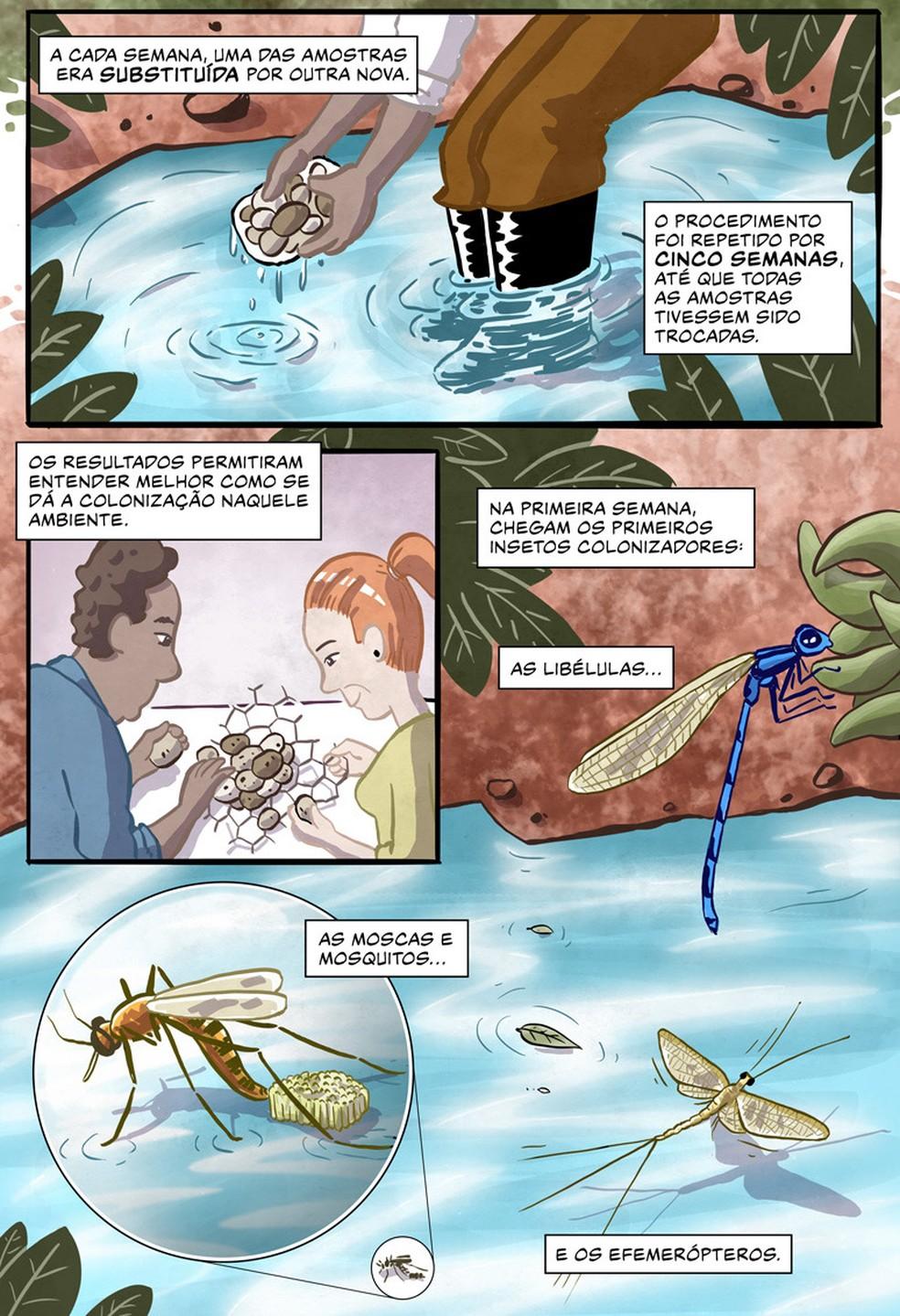 """""""Ciclos"""" - parte 3: história em quadrinhos ilustra e reconta os resultados de artigo científico sobre o ciclo de vida dos insetos — Foto: Divulgação/Luciano Queiroz e Marco Merlin"""