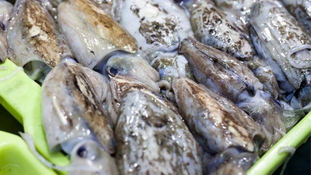 Muitas espécies de peixe estão em declínio devido à pesca indiscriminada, diz o estudo (Foto: Getty Images)