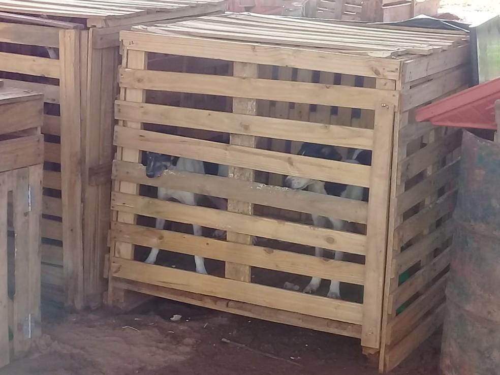Animais eram mantidos em pequenas caixas — Foto: Polícia Ambiental/Cedida