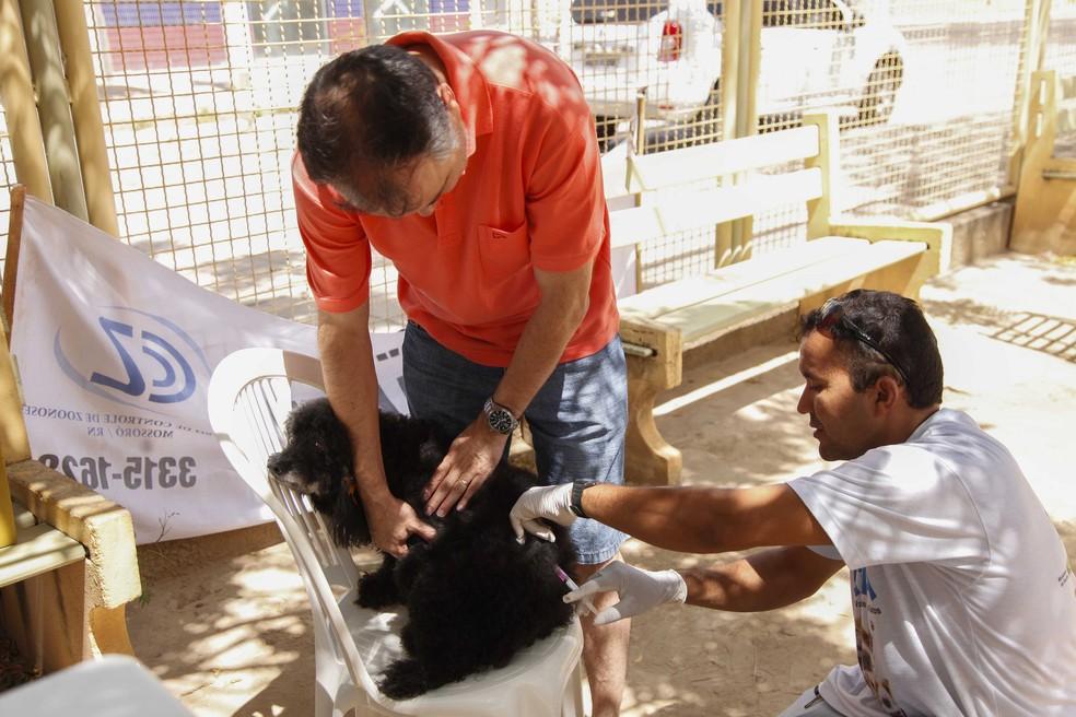 Vacinação antirrábica acontece neste sábado em Mossoró e Natal — Foto: Prefeitura de Mossoró/Divulgação