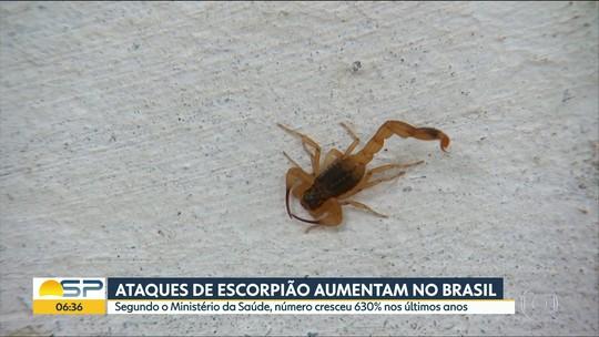 'Só queremos saber onde foi o erro', diz avó de menina que morreu após ser picada por escorpião