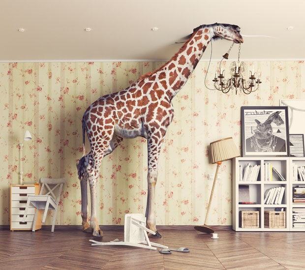 giraffe breaks the ceiling in the living room. Photo and cg  combination concept (Foto: Getty Images/iStockphoto)