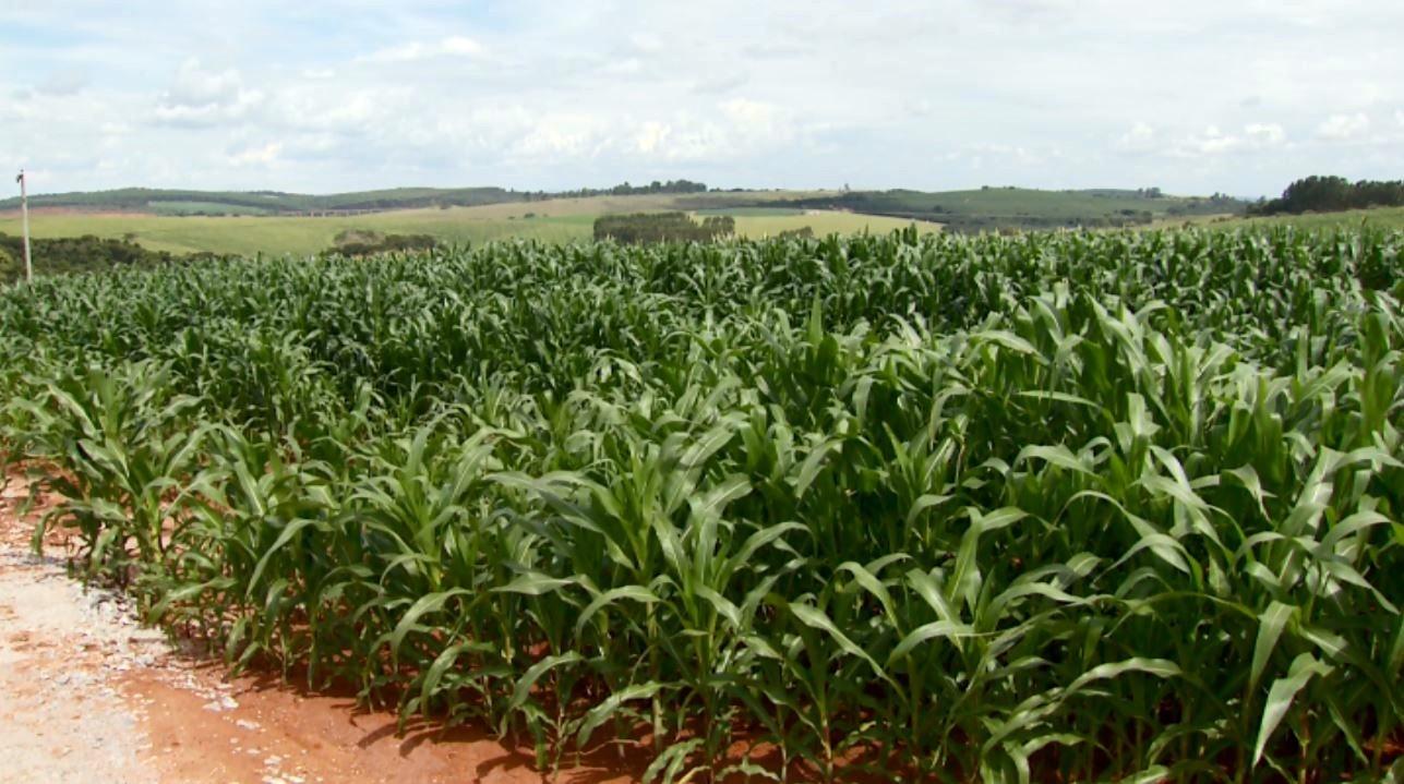 Pesquisa aponta queda de quase 13% na renda do produtor rural no Sul de Minas