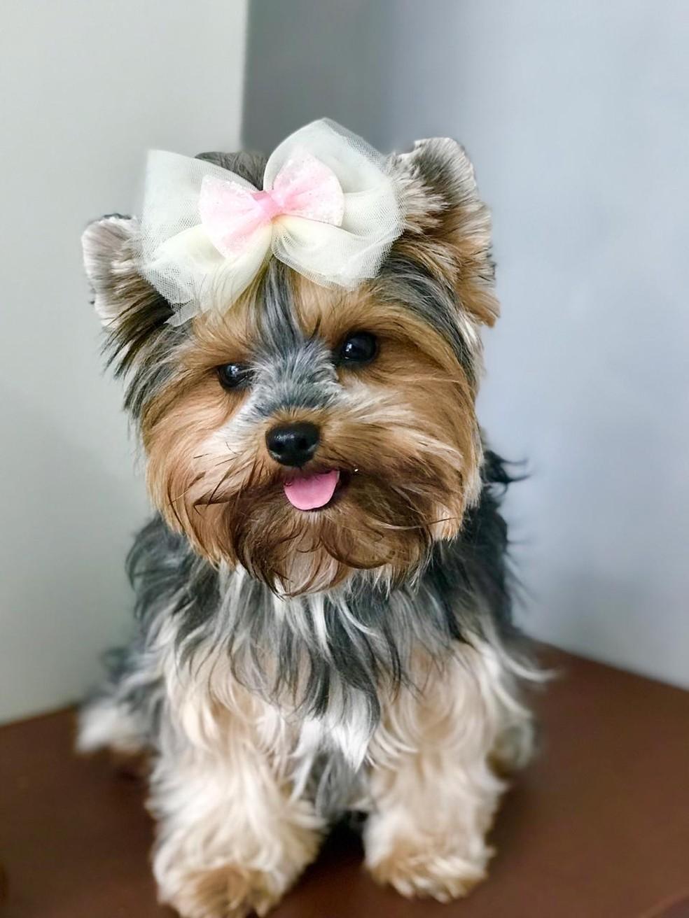 Maya, cachorra de Larissa, trabalha com ela na loja — Foto: Larissa Garcia/Arquivo pessoal