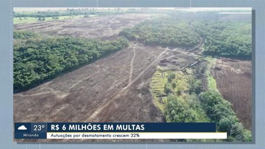 Autuações por desmatamento crescem 32%