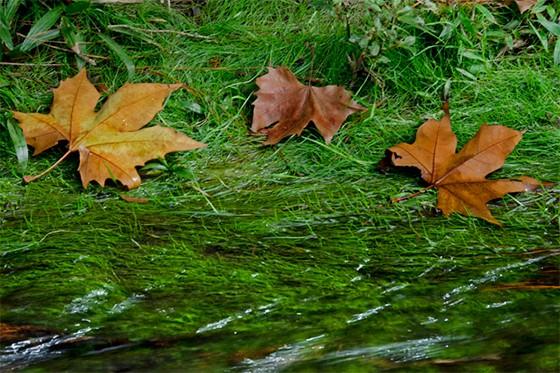 folhas-secas-nas-margens-do-riacho.jpg