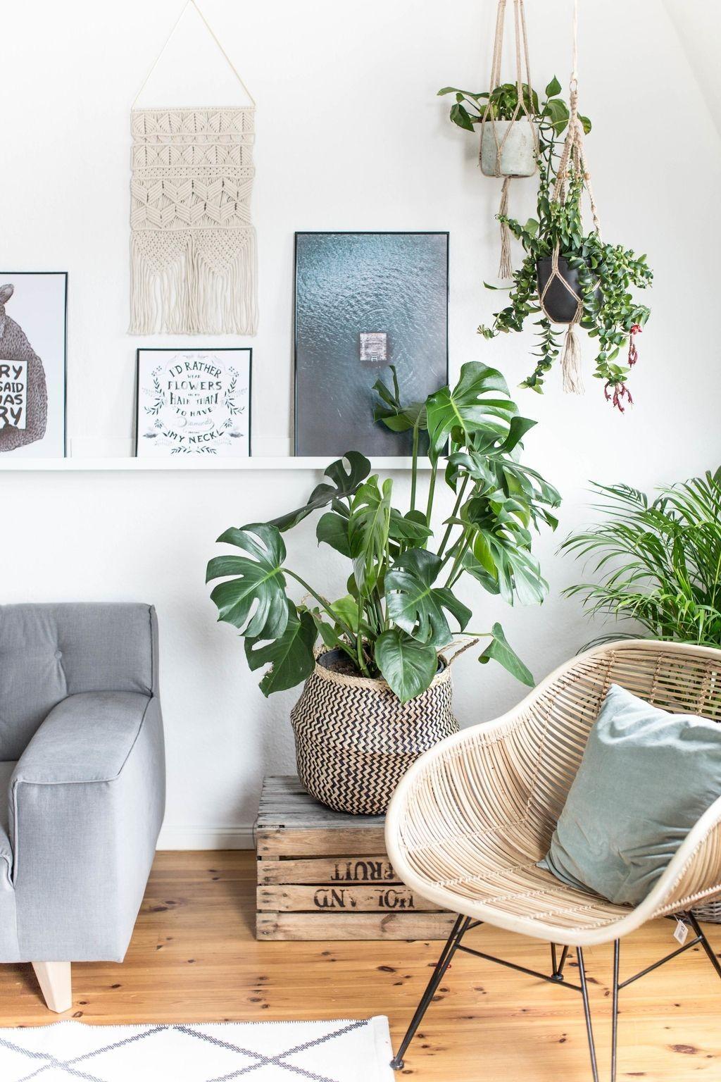 8 plantas para refrescar o lar e melhorar a qualidade do ar no verão