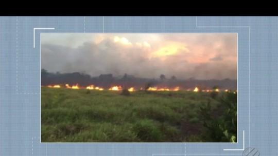 Incêndio florestal destrói 35 hectares de terra o município de Vigia, no PA