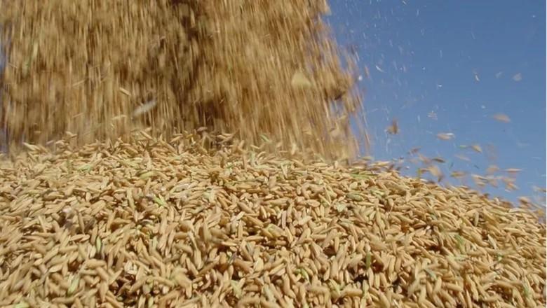 arroz (Foto: Divulgação)