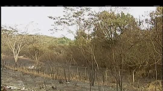 Incêndio entre Uberaba e Conceição das Alagoas é considerado o maior da região, segundo bombeiros