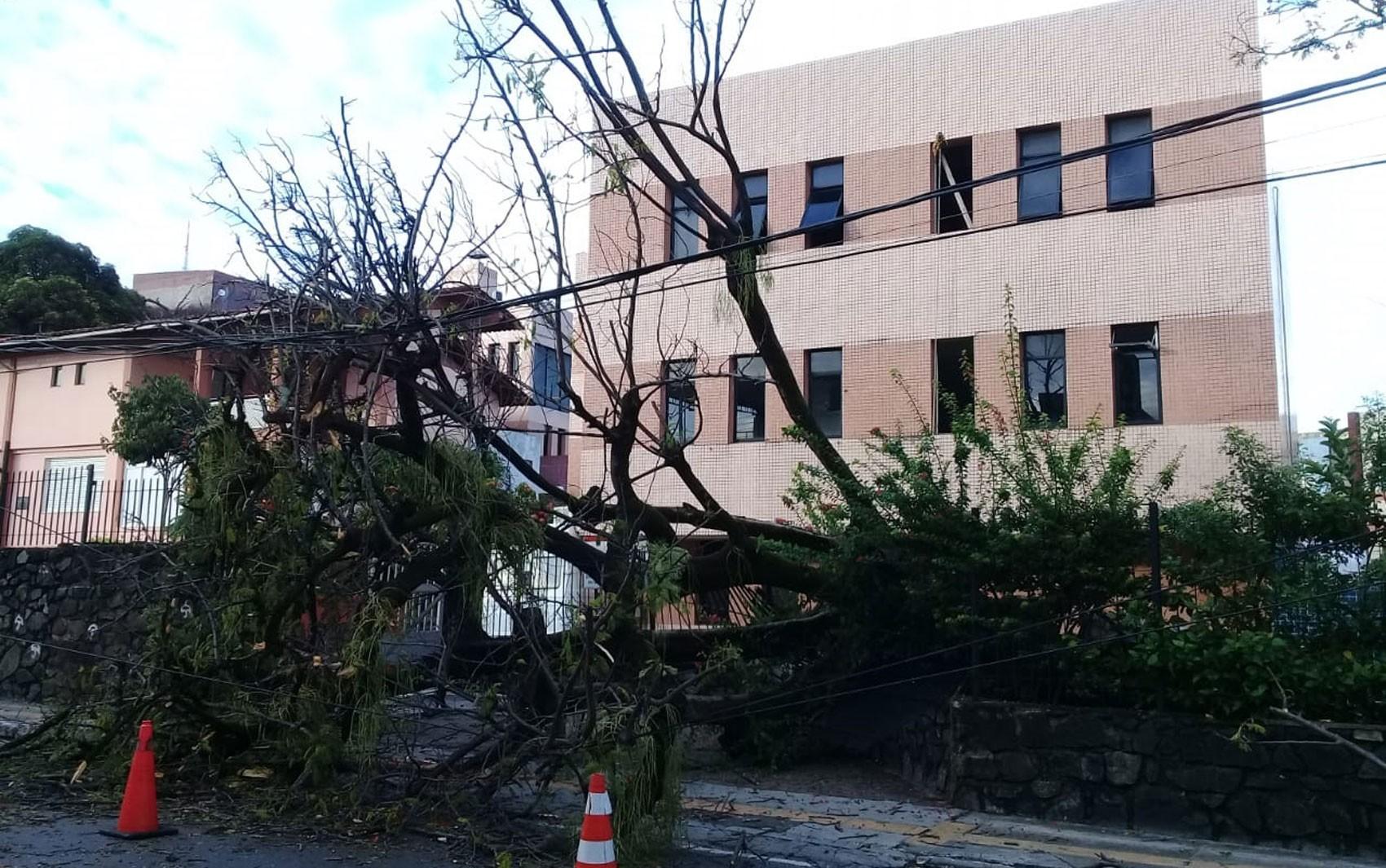 Árvore desaba e interdita parte de rua no bairro da Federação, em Salvador