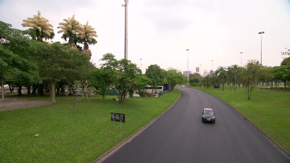Talipots podem ser vistas das pistas do Aterro — Foto: Reprodução/TV Globo
