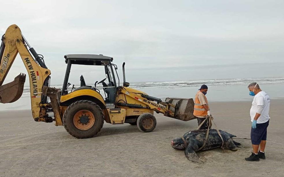 Tartaruga-de-couro foi encontrada morta em praia de Itanhaém, SP — Foto: Divulgação/Instituto Biopesca