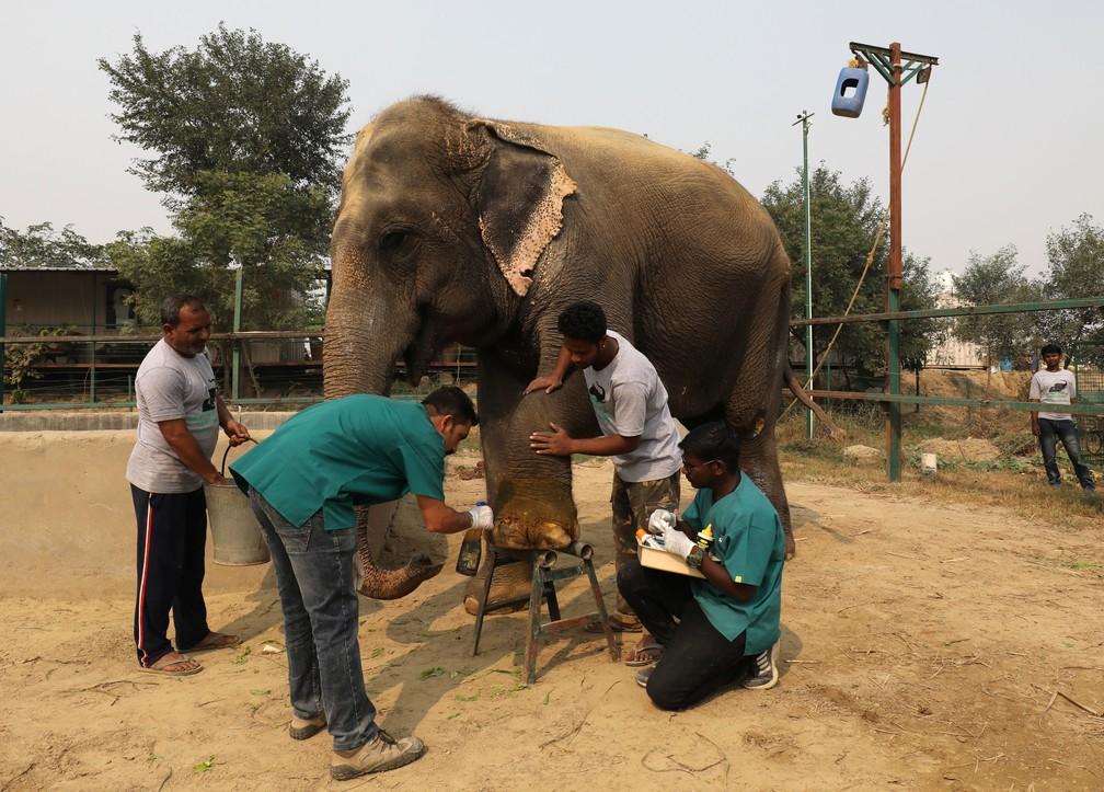 Hospital para elefantes é inaugurado na Índia — Foto: REUTERS/Anushree Fadnavis