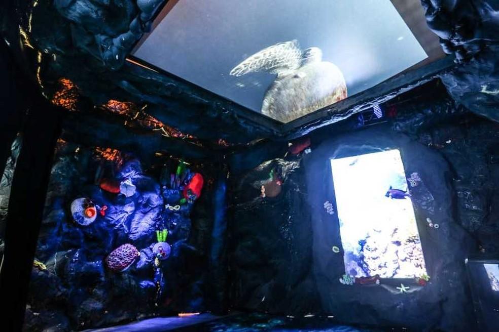 Aquário com réplicas de criaturas marinhas foi instalado no Passeio das Águas, em Goiás — Foto: Divulgação
