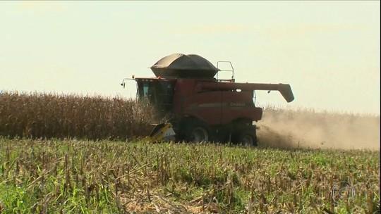 Na primeira colheita da safra, preço do milho agrada agricultores
