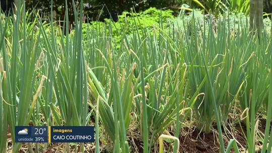 Propriedade rural cultiva produtos orgânicos para doação