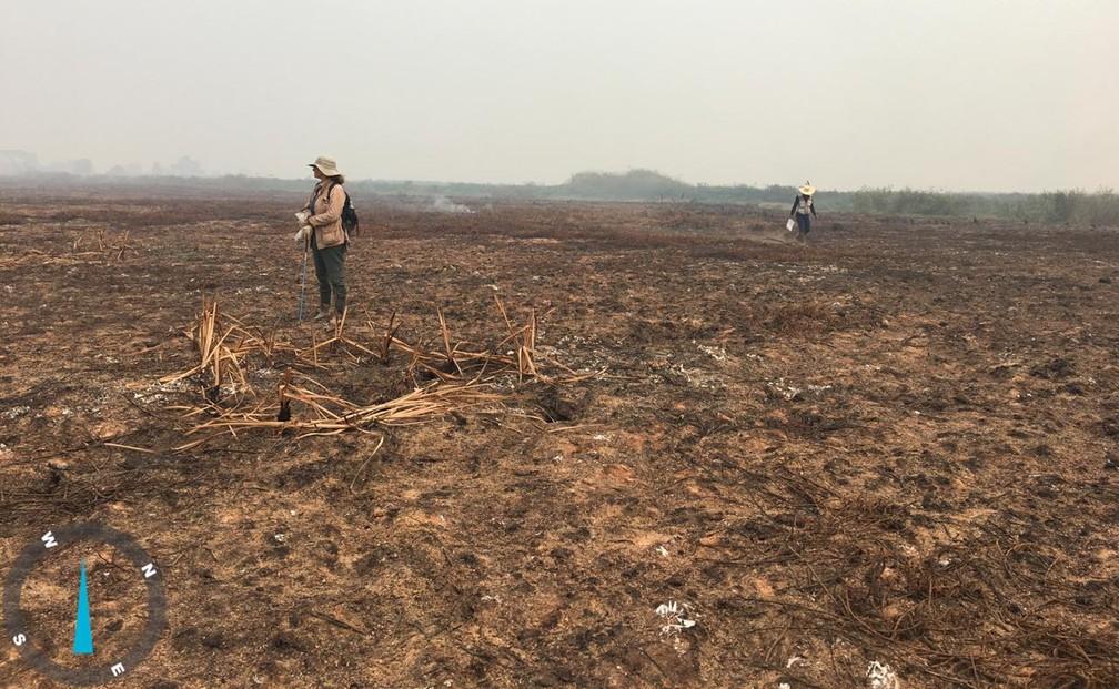 Pesquisadores percorrem áreas devastadas pelas queimadas no Pantanal — Foto: Thiago Semedo/Arquivo pessoal