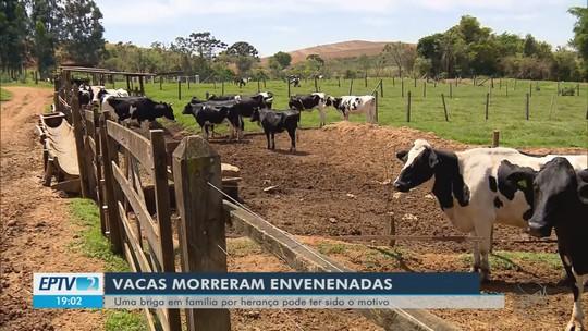 Polícia investiga suspeita de envenenamento de vacas em sítio de Caldas, MG