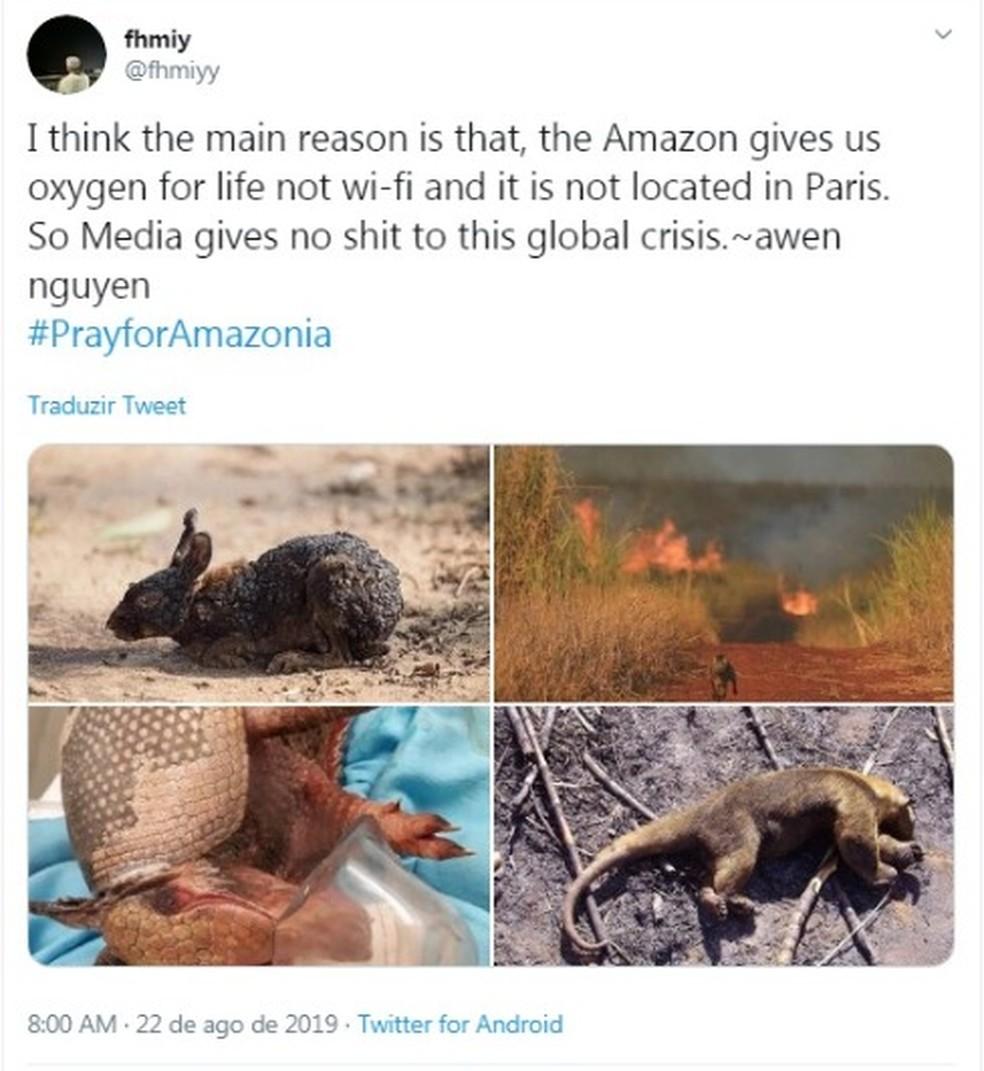Tuíte tem imagens de animais feridos ou mortos; nenhuma das fotos, porém, foi registrada na Amazônia — Foto: Reprodução/Twitter